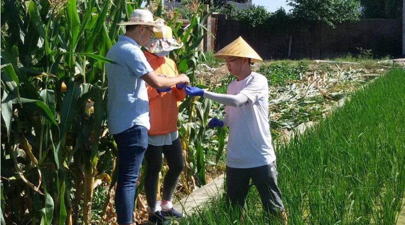 Members of the research team collecting samples in a rice paddy field in Changsha, China. Credit Jianzhong Lin
