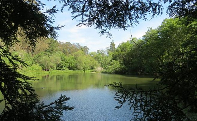 This lake in Berkeley, Calif., was one source of the toluene-producing enzyme (phenylacetate decarboxylase) discovered in the JBEI study. Credit (Credit: Chickmarkley)