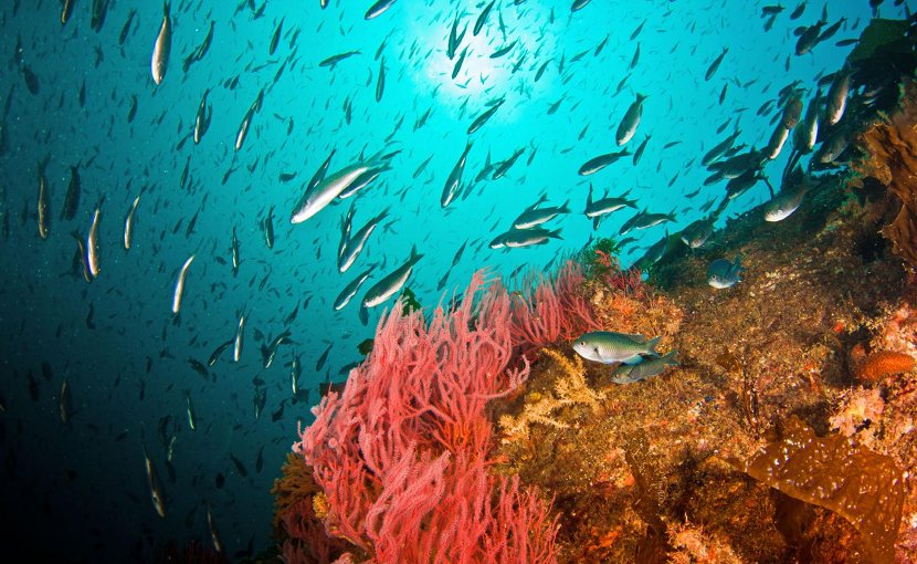 Fish school around a drill rig off Southern California. A new report says West Coast waters are returning to normal after warm temperatures shook up the food web. Credit Adam Obaza/West Coast Region/NOAA Fisheries