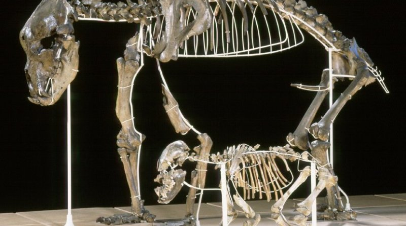 Adult cave bear with cub from the caves of Goyet in Belgium. Photo: Royal Belgian Institute of Natural Sciences