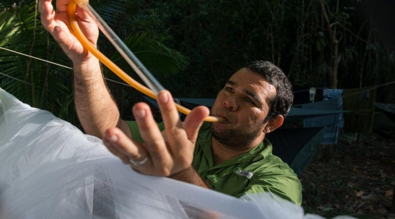 Jose Loaiza, STRI research associate and staff scientist at Panama's INDICASAT, collecting mosquitoes in Coiba National Park. Credit Credit: Sean Mattson, STRI