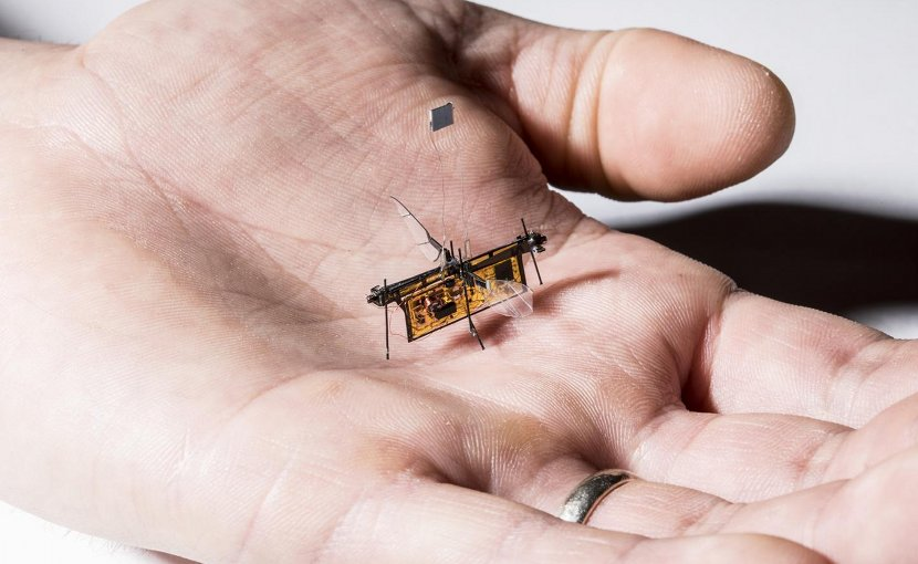 RoboFly, the first wireless insect-sized flying robot, is slightly heavier than a toothpick. Credit Mark Stone/University of Washington