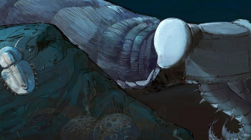 This is a reconstruction of the Cambrian predator and stem-lineage euarthropod Anomalocaris canadensis, based on fossils from the Burgess Shale, Canada. Credit Reconstruction by Natalia Patkiewicz