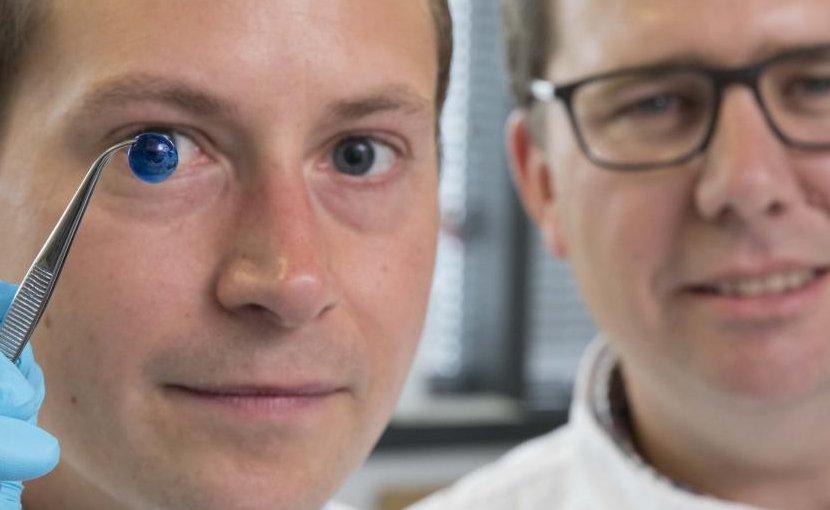 Dr. Steve Swioklo and Professor Che Connon with a dyed cornea. Credit Newcastle University, UK