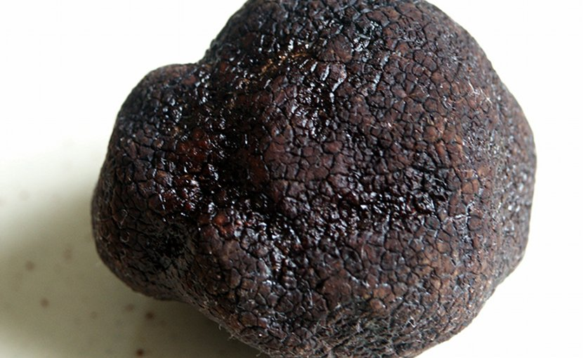 A Black Truffle. Photo by moi-même, Wikimedia Commons.