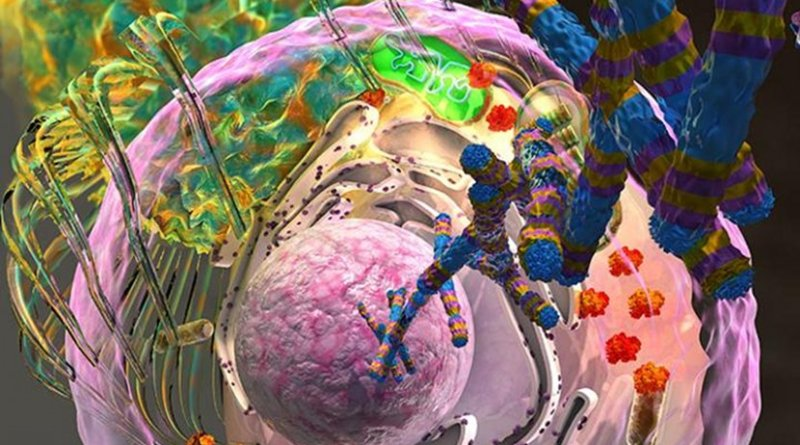 Depiction of the molecular processes involved in a new subtype of metastatic prostate cancer characterized by loss of the gene CDK12. Credit Alexander Tokarev, Ella Maru Studio