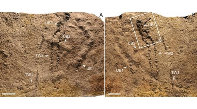 Trackways and burrows excavated in situ from the Ediacaran Dengying Formation. Credit NIGP