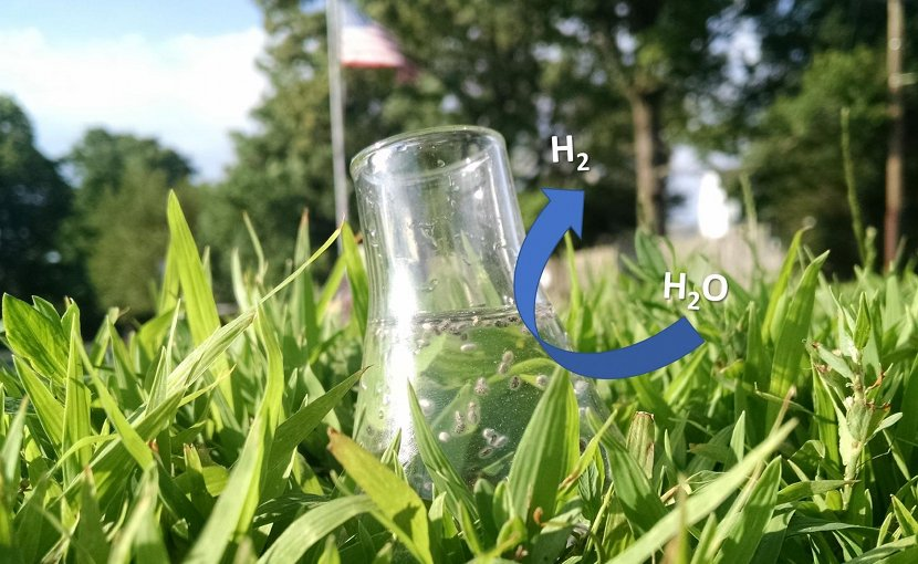 When exposed to sunlight, star-shaped gold nanoparticles coated with a semiconductor allow efficient production of hydrogen from water. Credit Ashley Pennington/Rutgers University-New Brunswick