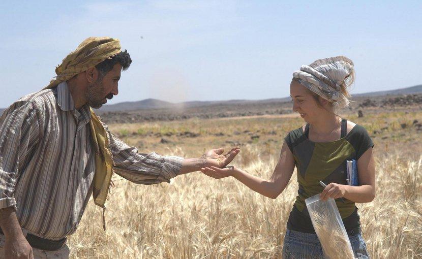 Dr. Amaia Arranz-Otaegui and Ali Shakaiteer sampling cereals in the Shubayqa area. Credit Photo: Joe Roe