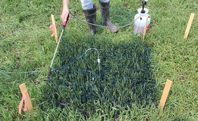 At the onset of the experiment, a pesticide sprayer is used to apply blue-dyed water on top of a 39 inch square (1 m by 1 m) soil plot. Credit Genevieve Ali