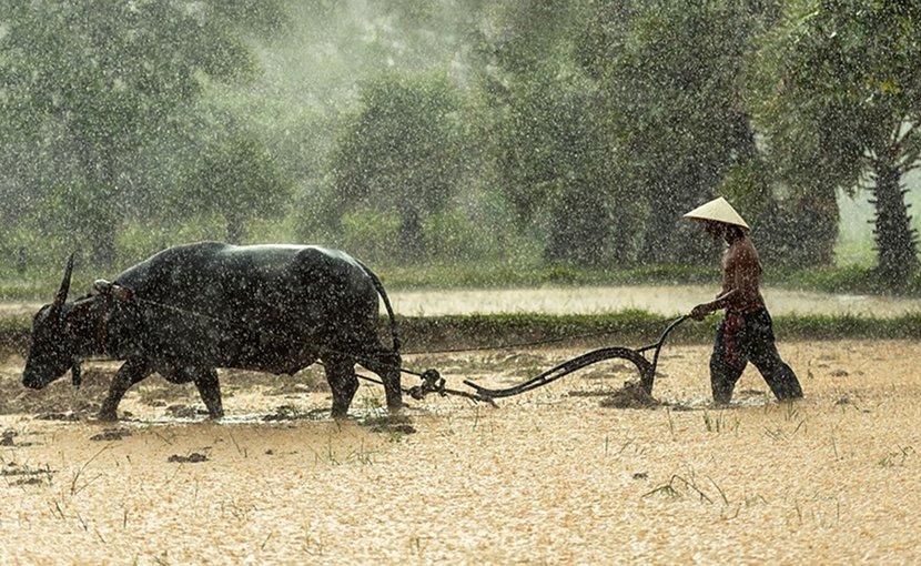 burma farmer