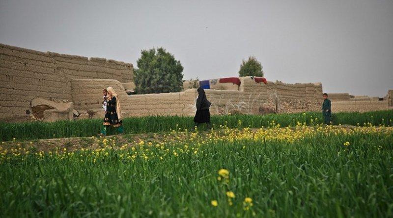Farmland in Afghanistan.