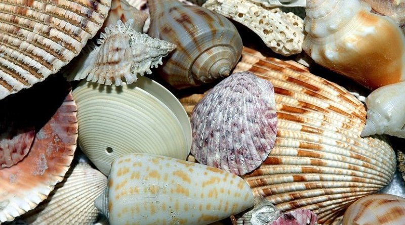 shells clams mollusks
