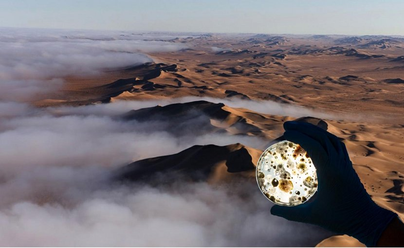 Fog on the Namib Desert with inset of related microbes. Credit Sarah Evans