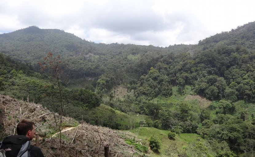 This is fresh deforestation in Honduras. Credit Monte Neate-Clegg