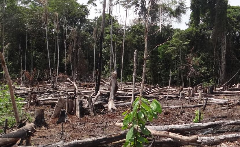 This is a tropical rainforest clearcut in Puerto Nariño, Colombia. If Colombia doesn't take protective action, deforestation could get worse with the end of a decades-long conflict. Credit María Elena Gutiérrez Lagoueyte at Universidad EIA
