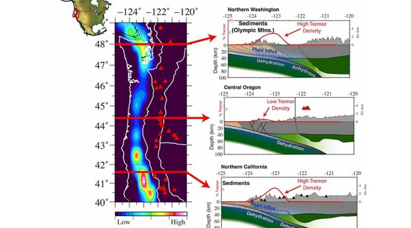 Rice University scientists studied how the density of microseismicity, or small tremors, related to the seismic structure of the Pacific Northwest in the United States. Red lines in the graphic at left correspond to cross-sections from northern Washington (top), central Oregon (middle), and northern California (bottom). The researchers determined a strong correlation exists between tremor density and underthrusting sediments (brown material in the graphics on right). Fluids that are released from the downgoing slab are concentrated in these sediments and lead to very slow seismic velocities in the region. Credit Jonathan Delph/Rice University