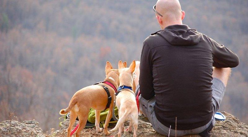 bald man hiking dogs