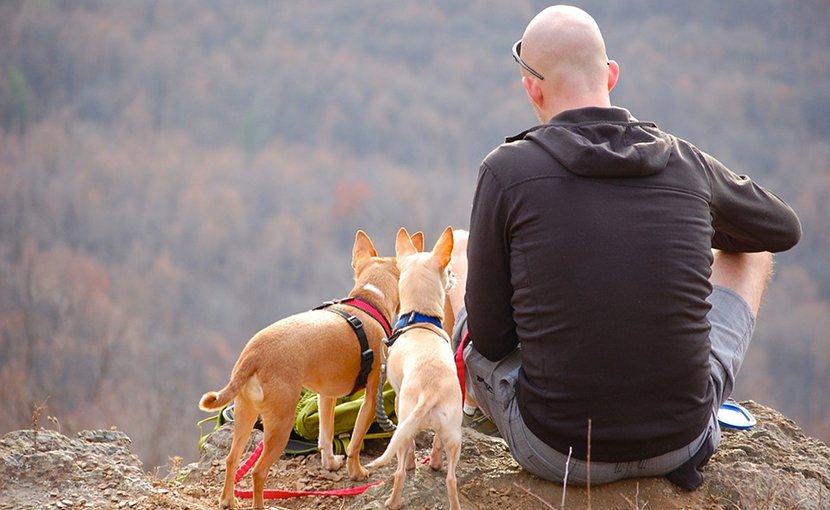 bald man hiking dogs