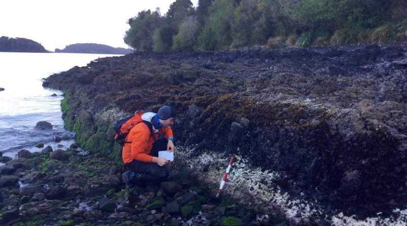 Ed Garrett of Durham University examines bleached coralline algae related to the the 2016 magnitude 7.6 Chiloé earthquake in Chile. Credit Martin Brader