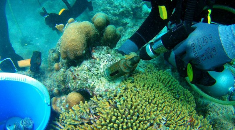 Scientists collecting bioeroding sponges using a pneumatic drill. Credit Alice Webb