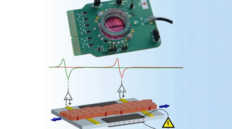 Fully assembled mechano-active multi electrode array (MaMEA) with the schematic drawing illustrating the function of the device and the traces showing electrical activation of the tissue recorded by two gold-ion implanted extracellular electrodes. © University of Bern