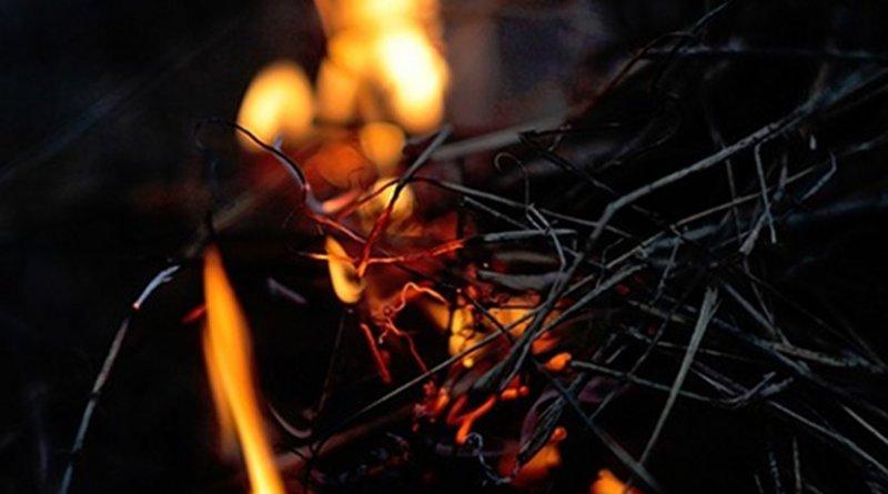 bonfire fire fuel twigs