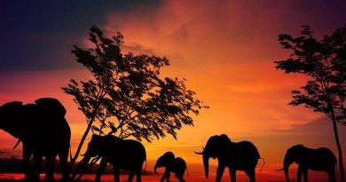 serengeti africa elephants