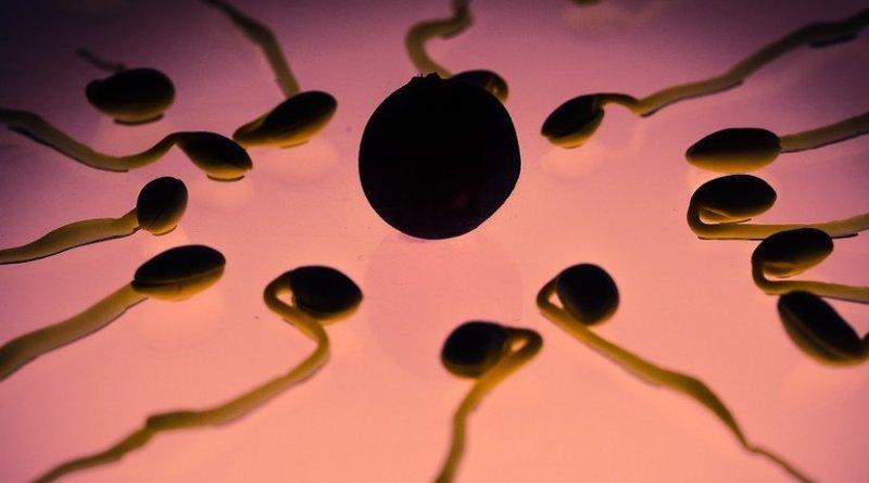 sperm egg fertilization