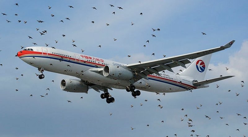 An Airbus A330 of China Eastern behind a flock of birds at London Heathrow. Photo Credit: NMOS332, Wikipedia Commons