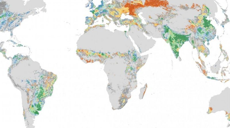 Global distribution of manure-rich cultivated areas. Green shades represent manure-rich areas with the most potential for recycling phosphorus. Manure-rich cultivated grid cells were most abundant in India, China, Southeast Asia, Europe and Brazil. Smaller patches are seen in central and east Africa, central United States and Central America. Credit Stevens Institute of Technology