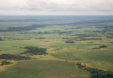 Llanos de Moxos, Amazonia, Bolivia. Photo Credit: Sam Beebe, Wikipedia Commons.