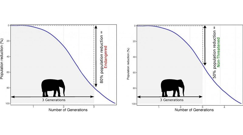 Underestimation of generation time leads to an underestimation of extinction risk when scientists assess populations of threatened species. Credit Johanna Staerk et al. (2019)