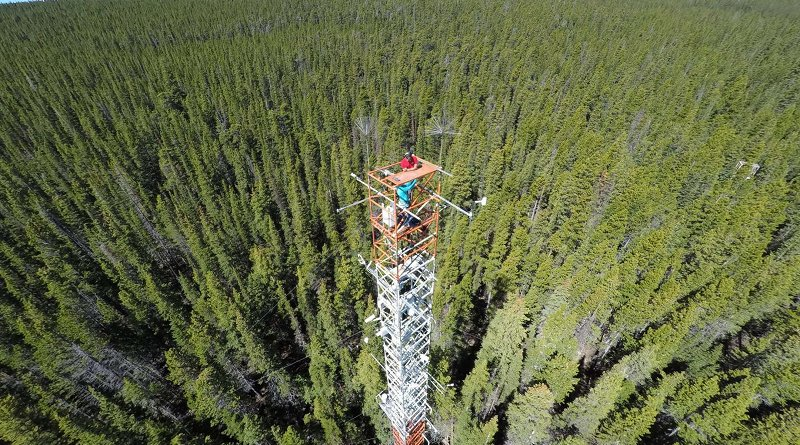 The spectrometer system mounted atop a tower in a subalpine conifer forest at Niwot Ridge, Colorado, collected data between June 2017 and June 2018. The scientists compared the solar-induced fluorescence (SIF) measured by the system to the physiological changes inside the conifer needles to better understand why we see SIF seasonal cycles. Credit Troy Magney