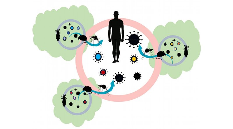 Auburn researchers have published a new hypothesis, the coevolution effect, that could provide the foundation for new scientific studies looking into the association of habitat loss and the global emergence of infectious diseases. The image shows: Within forest fragments (green shapes), parasites and hosts coevolve, shifting genetic diversity of disease-causing microbes (viral particles in each fragment). Therefore, across a fragmented landscape, an increase in pathogen diversity (viral particles of different colors in the center) is observed. When combined with vectors like ticks and mosquitoes that can move these viral particles out of forest fragments, the probability that one may lead to an emerging infectious disease in human populations increases. Credit Sarah Zohdy, Jamie Oaks and Tonia Schwartz
