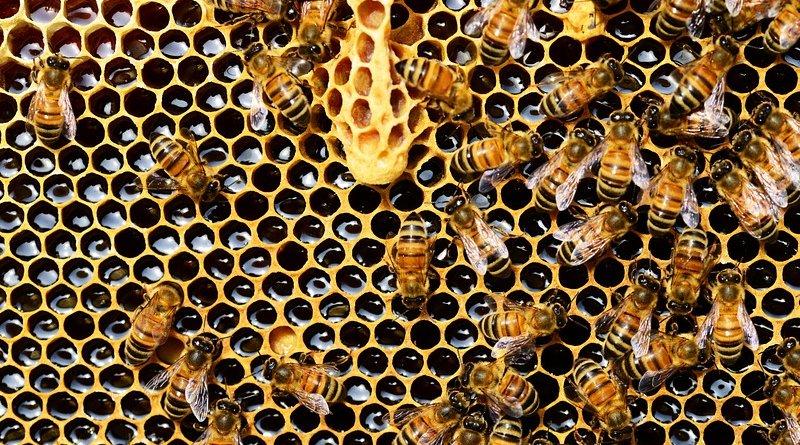 honeycomb honey bees colony