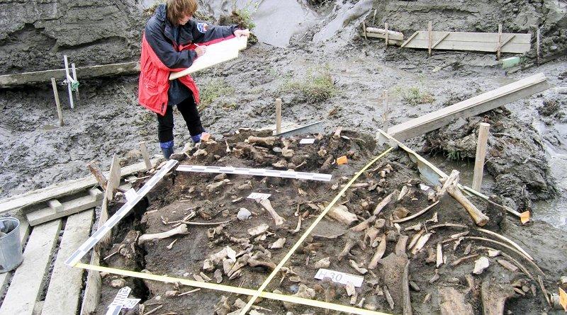 Alla Mashezerskaya maps the artefacts in the area where two 31,000-year-old milk teeth were found. Credit Elena Pavlova