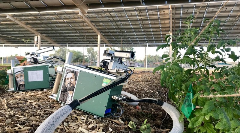 The researchers test the heat and moisture under the solar panels to study the cooling relationship between the crops and panels. Credit Greg Barron-Gafford