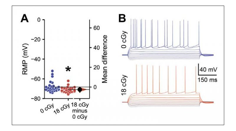 Radiation exposure alters the electrophysiological properties of neurons in the hippocampus. Credit Acharya et al., eNeuro 2019