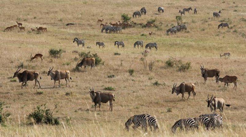 Masai Mara plains in East Africa. Credit Dr. Jakob Bro-Jørgensen