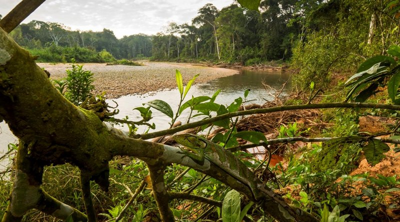 The research showed some wilderness areas, such as areas surrounding Madidi National Park in the Bolivian Amazon, play an extraordinary role in their respective regional contexts, where their loss would drastically reduce the probability of persistence of biodiversity. Credit Rob Wallace/WCS