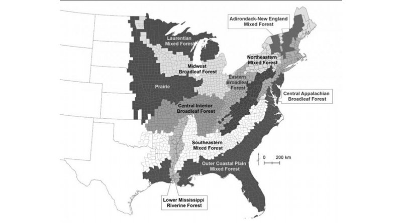 This map shows units where the researchers collected data from forest inventory areas maintained and surveyed every five years by the US Department of Agriculture Forest Service, along with forest types in the eastern United States. Credit Penn State