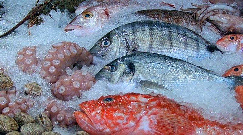 fish market octopus