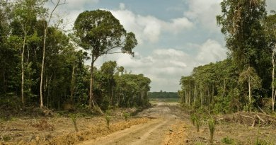 Road for oil palm plantations in West Kalimantan, Indonesia. Credit Rainforest Action Network