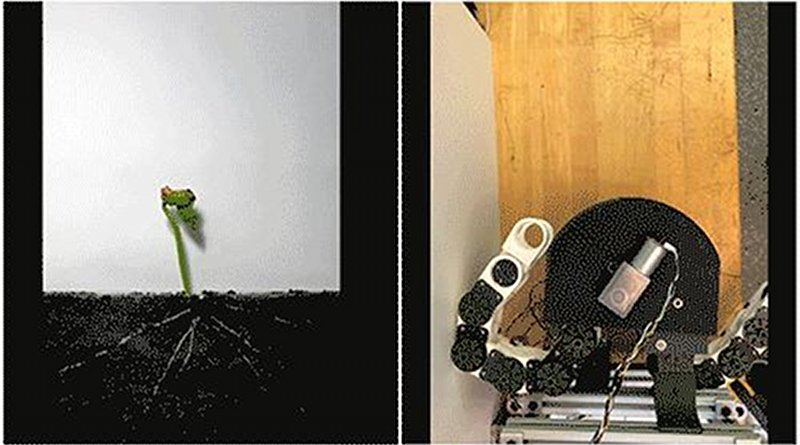 """The new """"growing robot"""" can be programmed to grow, or extend, in different directions, based on the sequence of chain units that are locked and fed out from the """"growing tip,"""" or gearbox. CREDIT Image courtesy of Harry Asada, Tongxi Yan, Emily Kamienski and Seiichi Teshigawara"""