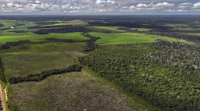 Secondary forests are increasingly fragmented, and isolated from remaining primary forests. CREDIT Marizilda Cruppe/Rede Amazônia Sustentável