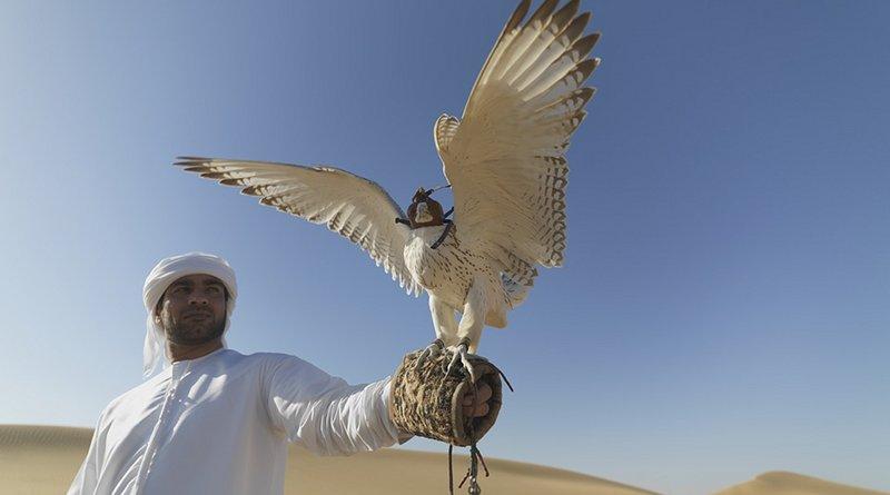 falcon bird desert