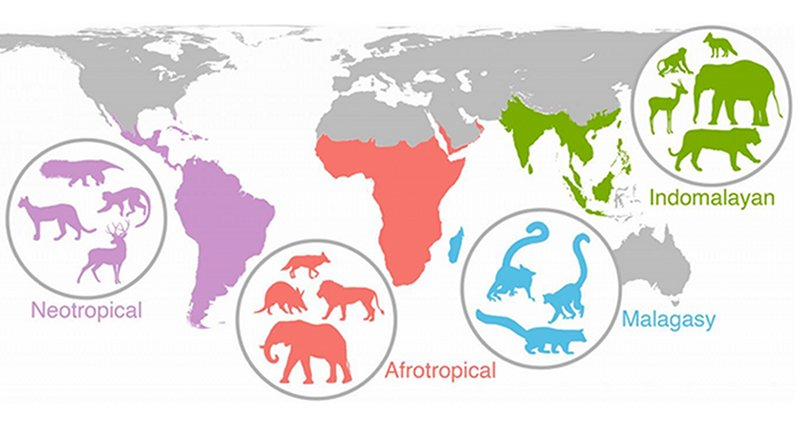 Researchers have discovered that events from 20,000 years ago or more are still impacting the diversity and distribution of mammal species worldwide. It took almost five years to create and analyze the study's data, which includes information about the diets, body sizes and variety of species in 515 mammal communities from Africa, Asia, Madagascar and the Americas. CREDIT Figure courtesy of John Rowan/UMass Amherst