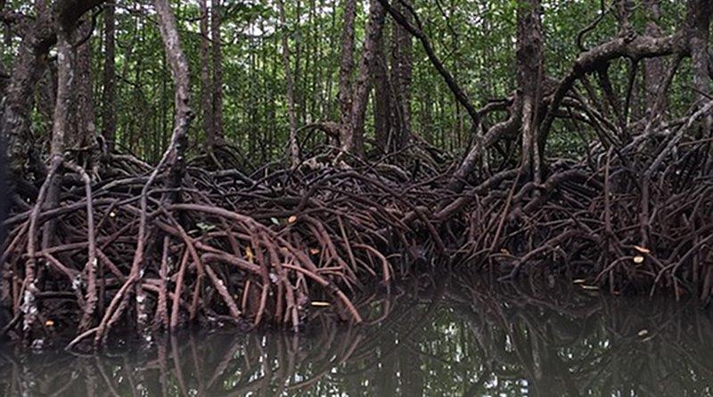 Mangroves Philippines