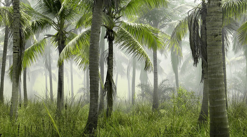 tropical forest Palm Trees Grass Field Nature Tropical Exotic